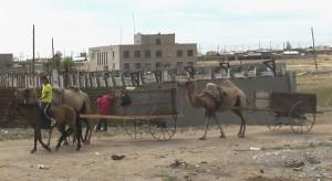 kamelenkar
