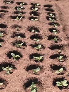 jonge_plantjes